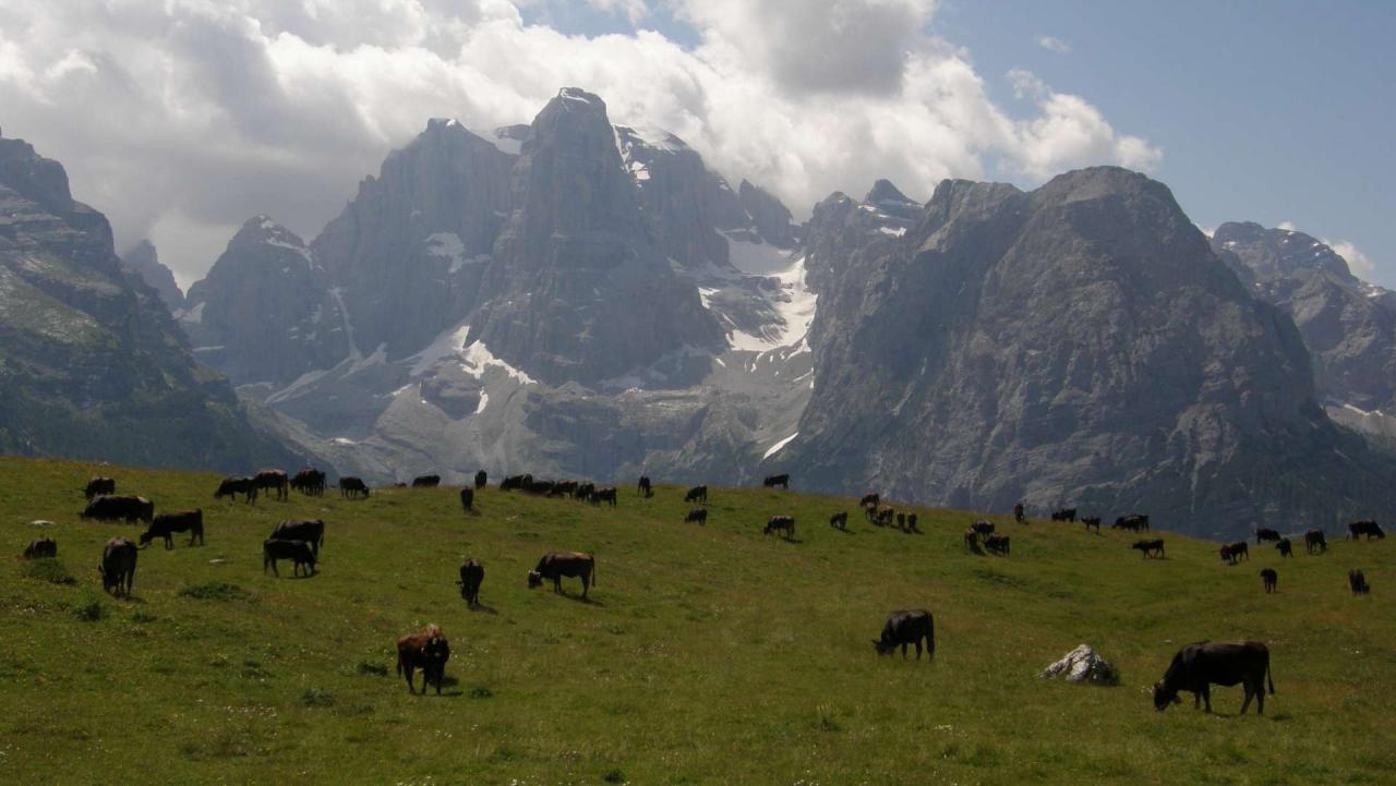 11771 Vacca razza Rendena al pascolo e Crozzon di Brenta Michele Zeni